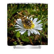 Daisy And Bee Shower Curtain