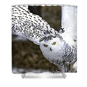 Landing Of The Snowy Owl Where Are You Harry Potter Shower Curtain