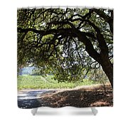 Landscape At The Jack London Ranch In The Sonoma California Wine Country 5d24583 Shower Curtain