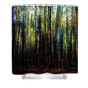 Landscape Forest Trees Tall Pine Shower Curtain