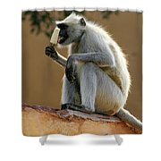 Langur With Kulfi Shower Curtain