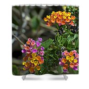 Lantana Blooms Shower Curtain