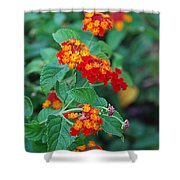 Lantana Delight Shower Curtain