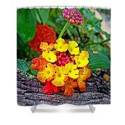 Lantana Flowers 2 Shower Curtain