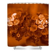 Lantana Sepia Shower Curtain