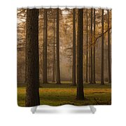 Larch Grove Shower Curtain by Anne Gilbert