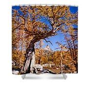 Larch Tree Frames Prusik Peak Shower Curtain