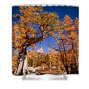Larch Trees Frame Prusik Peak Shower Curtain