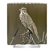 Large-billed Savannah Sparrow Shower Curtain