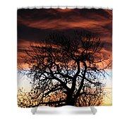 Large Cottonwood At Sunset Shower Curtain