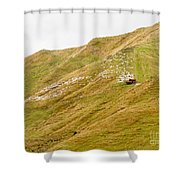 Large Flock Of Herded Sheep On A Steep Hillside Shower Curtain