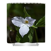 Large-flower Trillium Dspf279 Shower Curtain