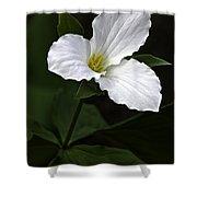 Large Flowered Trillium Shower Curtain