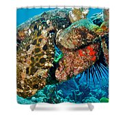 Large Frogfish Shower Curtain