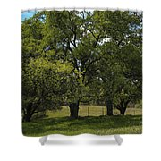 Large Green Oak Trees Shower Curtain