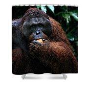 Large Male Orangutan Borneo Shower Curtain