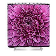 Large Pink Dahlia 2 Shower Curtain