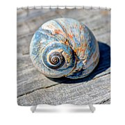 Large Snail Shell Shower Curtain