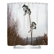 Large Trees In The Nature Park In Winter Shower Curtain
