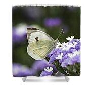 Large White Pieris Brassicae  Shower Curtain