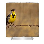 Lark On A Wire Shower Curtain