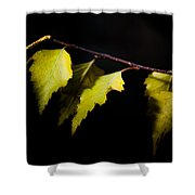 Last Autumn Gifts Shower Curtain