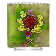 Last Blooms Number Four Shower Curtain