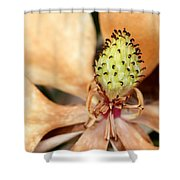 Last Days Of A Magnolia Shower Curtain