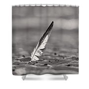 Last Days Of Summer In Black And White Shower Curtain