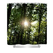 Last Light In The Forest Shower Curtain