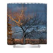 Last Light Last Leaves Shower Curtain