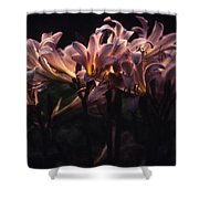Last Light Lillies Shower Curtain