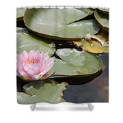Last Lily Of Fall Shower Curtain