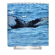 Last Looks Shower Curtain