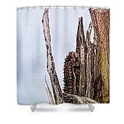 Last Of The Corn Shower Curtain
