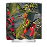 Last Of The Peppers Shower Curtain