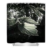 Last Rays II Shower Curtain by Jessica Myscofski