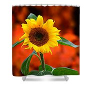 Last Sunflower Horizontal Shower Curtain