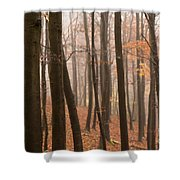 Late Autumn Beech Shower Curtain