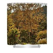 Late Autumn Walk Shower Curtain