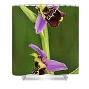 Late Spider Orchid Switzerland Shower Curtain