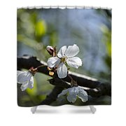 Late Spring Blossom Shower Curtain