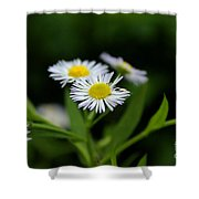 Late Summer Bloom Shower Curtain