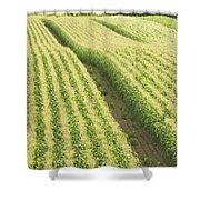 Late Summer Corn Field In Maine Shower Curtain