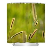 Late Summer Grasses Shower Curtain