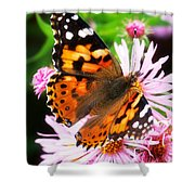 Late Summer Painted Lady Shower Curtain