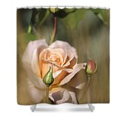 Late Summer Rose Shower Curtain