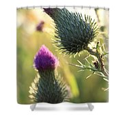 Late Summer Thistle - 2 Shower Curtain