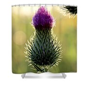 Late Summer Thistle Shower Curtain