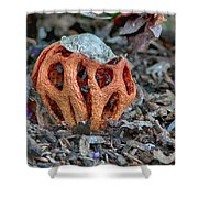 Latticed Stinkhorn Shower Curtain